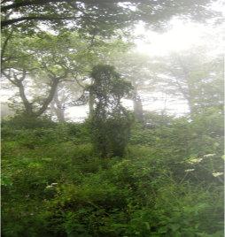 Gestalt in Bäumen Hypnose